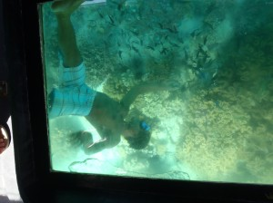 Guide swimming under glass bottom boat.